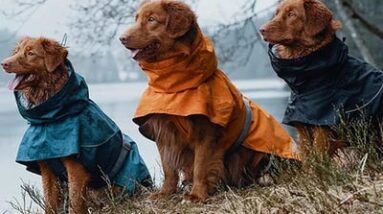 The 5 best dog raincoats in 2021, according to professional dog walkers and our testing