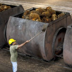 Malaysia in Talks to Double Palm Oil Shipments to Afghanistan
