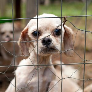 Puppy protection: A new bill would require breeders to quit stacking caged dogs on top of each other